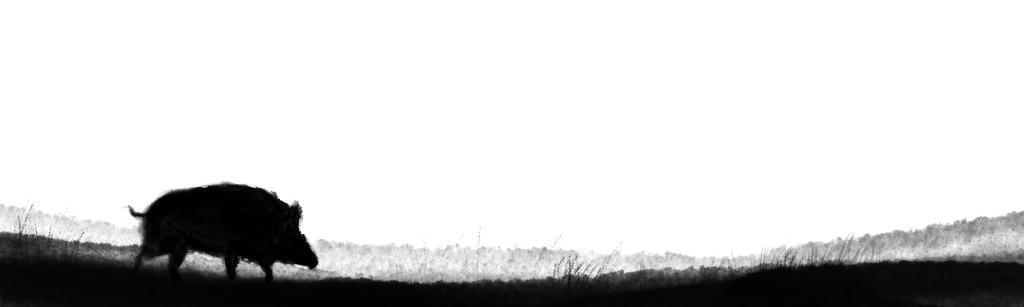 robin background 2